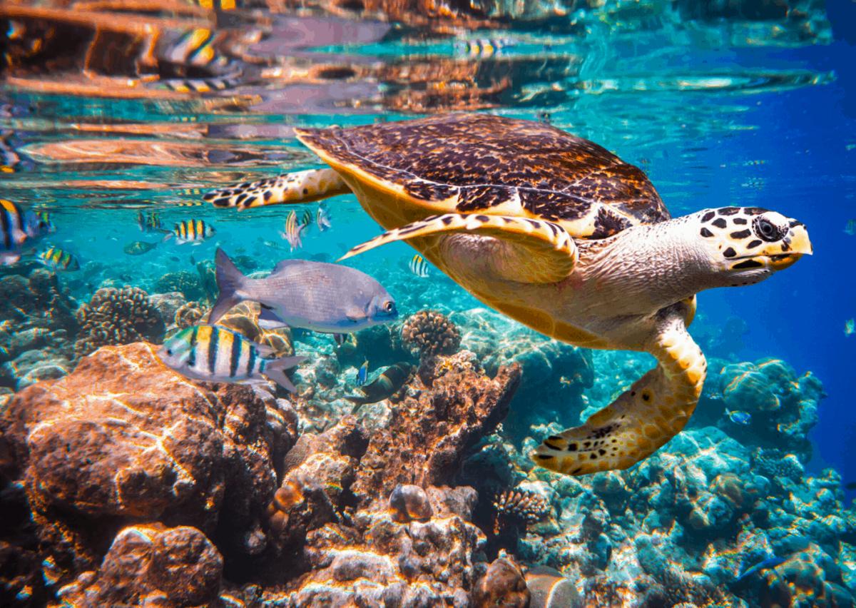 Schilderij Zeeschildpad