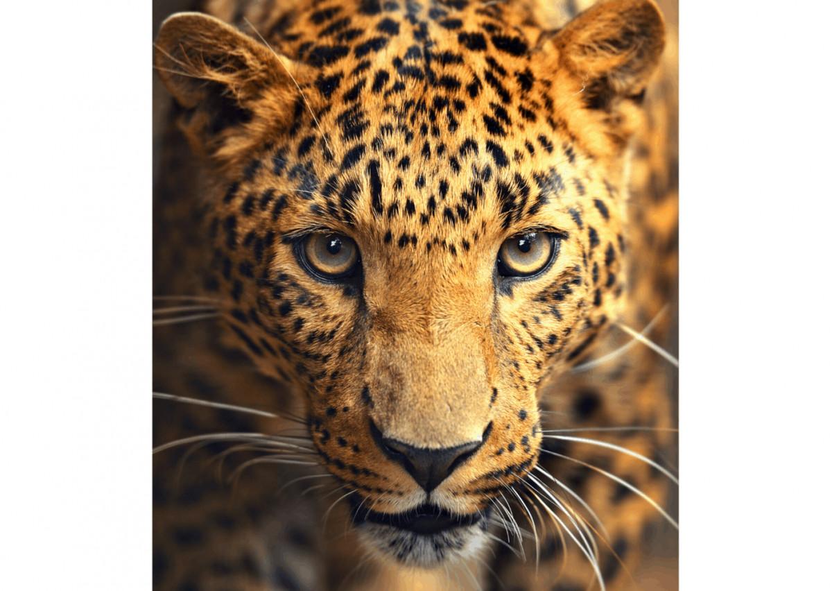 Schilderij Panther